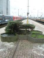 Dortmund Hbf/58632/hier-zumindest-der-versuch-ein-paar Hier zumindest der Versuch ein paar Pflanzen auf den Bahnsteig zu bringen. Hier im Dortmunder Hbf am S-Bahnsteig 7/8.